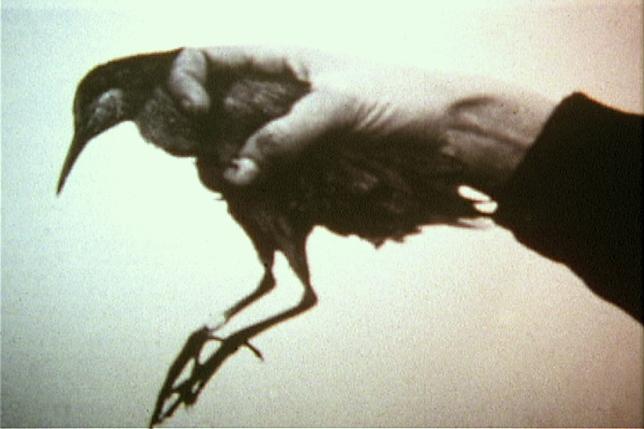 Deliquium (bird)2