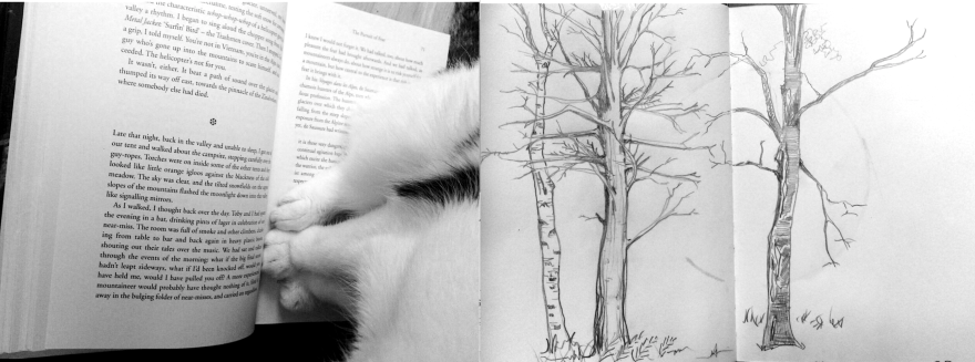 kitty reads about glaciers in the alps while hidden by trees
